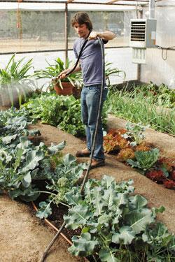 starting-a-vegetable-garden-inside2