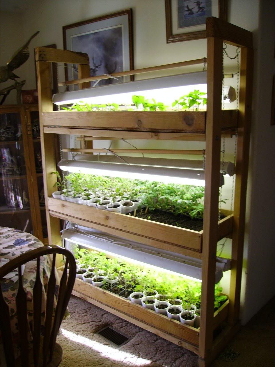 hardening off seedlings the arid land homesteaders league. Black Bedroom Furniture Sets. Home Design Ideas