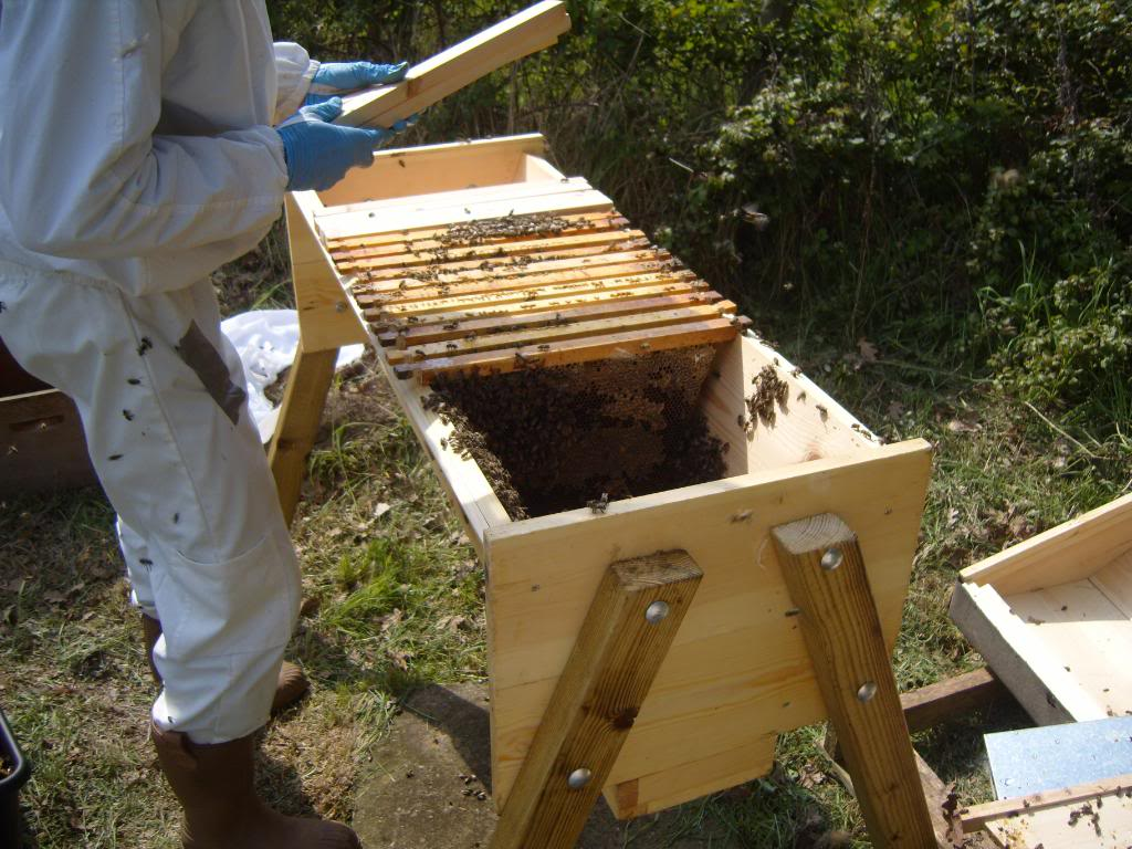 My Adventures With Bees: Introduction | The Arid Land Homesteaders League